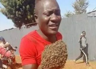 2 Thieves Attacked By Bees