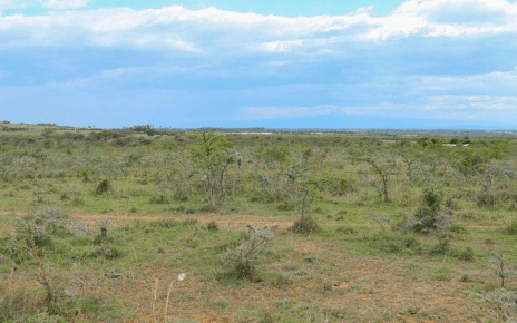 EXPOSED! How Kenyans get conned into buying cheap 'wilderness' plots