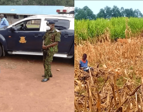 Schoolgirl Captured In Viral Photo Reading While Herding Cows Receives Help